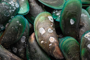 Feeding Green Lipped Mussels for Your Pet's Joint Health