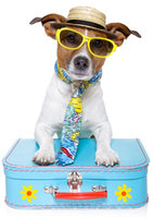Travel Safely with Your Pet This Summer