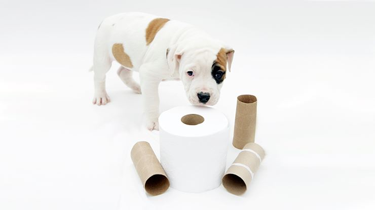 Potty Training Your Puppy Doesn't Have to Be A Nightmare!
