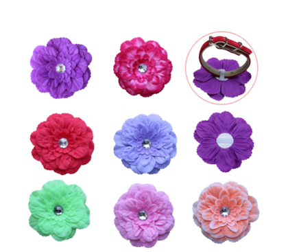 Sparky & Co Summer Couture Daisy Collar Embellishments (Assorted Collars) - Paw Naturals