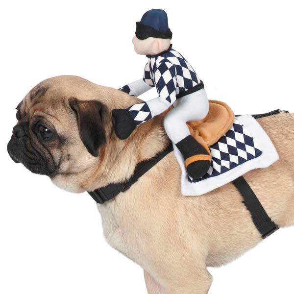 Zack & Zoey Show Jockey Saddle Pet Costume