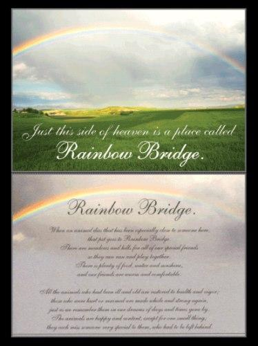 Dog Speak Sympathy Card Rainbow Bridge