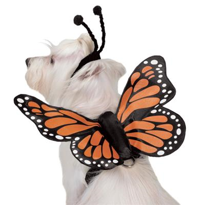 Zack & Zoey Butterfly Glow Harness Wings Costume