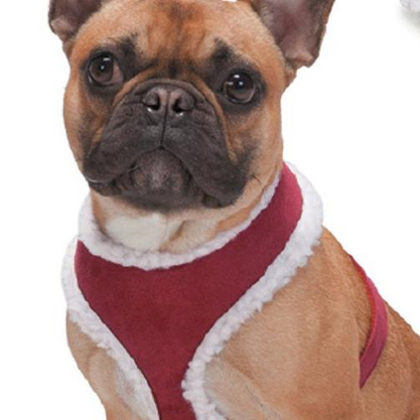 Zack & Zoey Shearling Harness Red