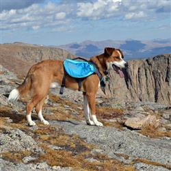 Outward Hound Daypak Dog Backpack Hiking Gear For Dogs - Paw Naturals