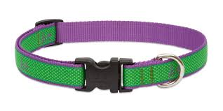 Lupine Augusta Club Dog Collar 1322""
