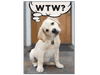 Dog Speak Birthday Card Wtw? - Paw Naturals