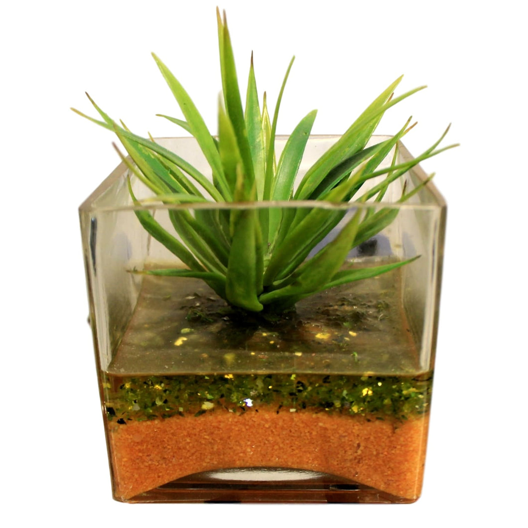 Catcus in Glass Vase