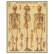 Load image into Gallery viewer, Skeletal System 1,000 Piece Puzzle