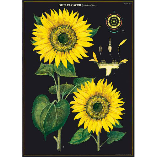 Sunflower Vintage Flat Wrap