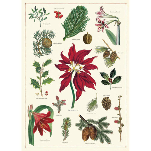 Christmas Botanical Poinsettia Wrap