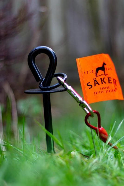 Dog Stake - Säker Tie Out Dog Stake - For Garden / Beach - Heavy Duty (Max 80kg) + Rustproof + Handy