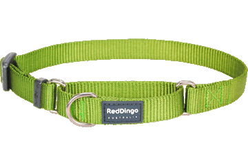Martingale - Red Dingo Martingale Half Check Collar Lime - Green (4 Sizes)