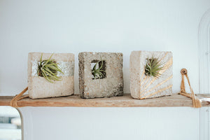 shop our collection of airplant holders