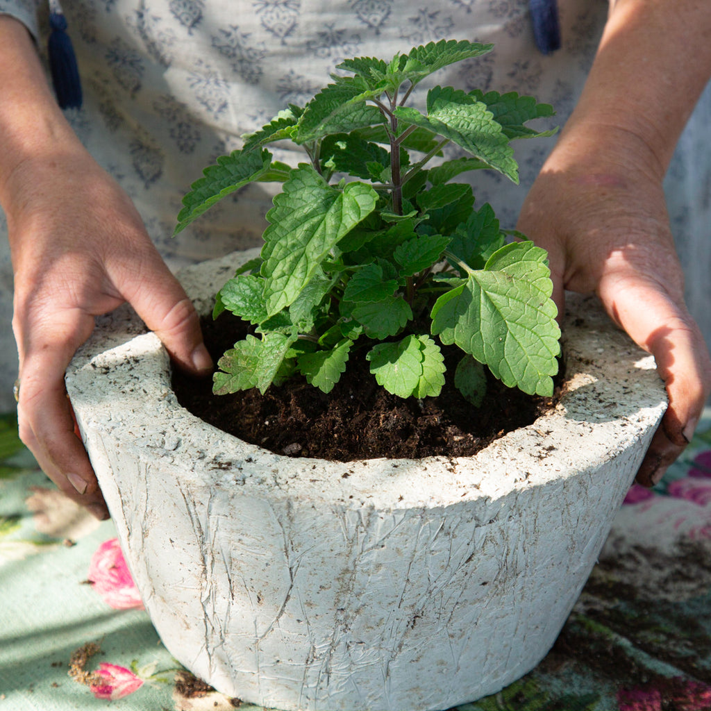 Catnip Herb Garden Planter -  DIY Kit