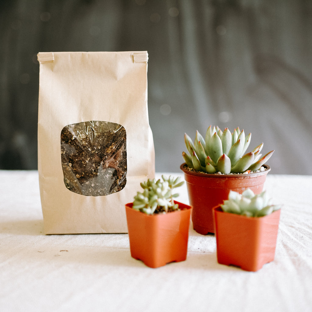 DIY Kit: Plants + Soil