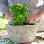 Italian Parsley Herb Garden Planter -  DIY Kit