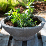 Mixed Herb Garden Planter - DIY Kit