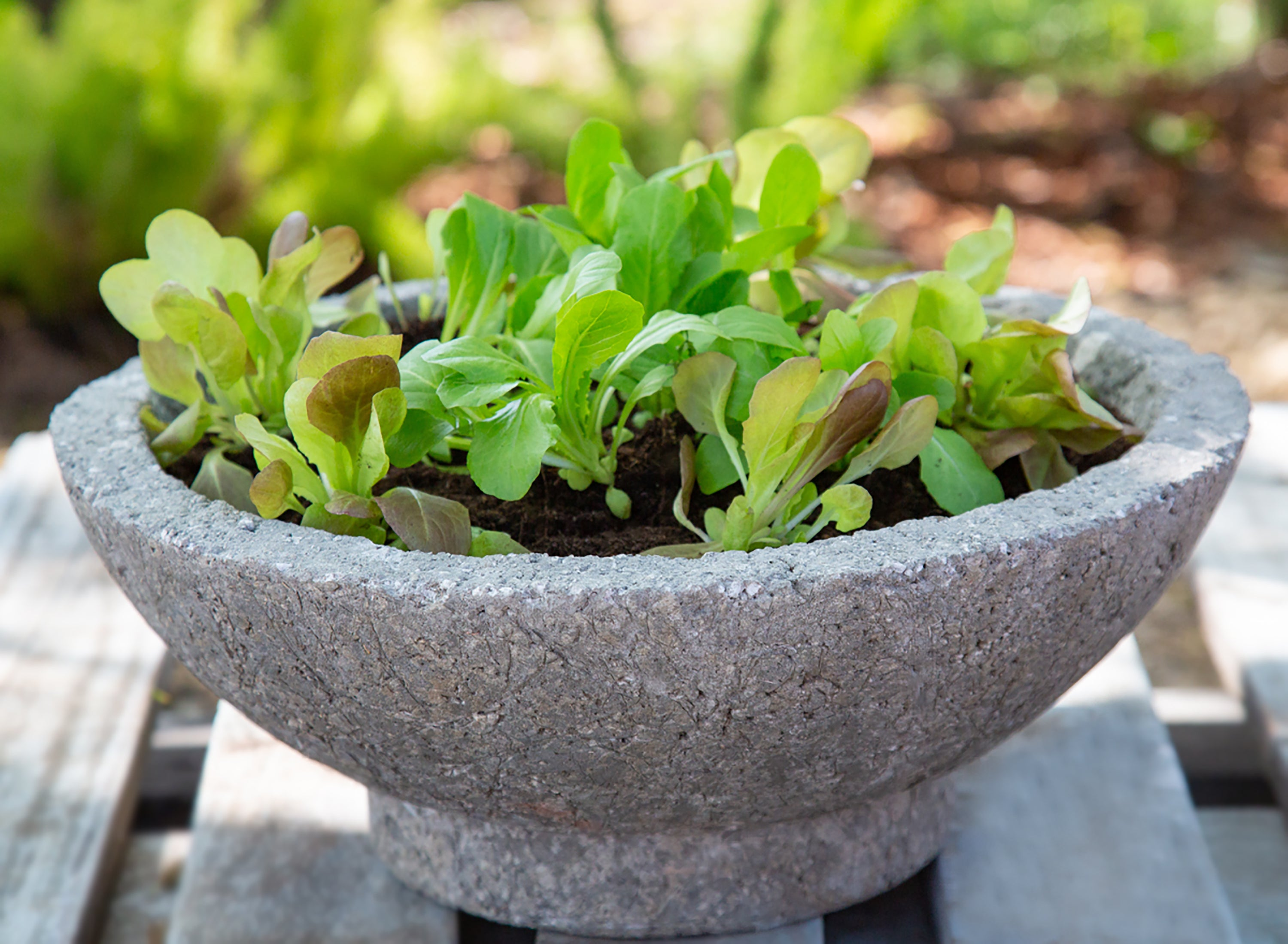 Salad Bowl Kitchen Garden Planter - DIY Kit