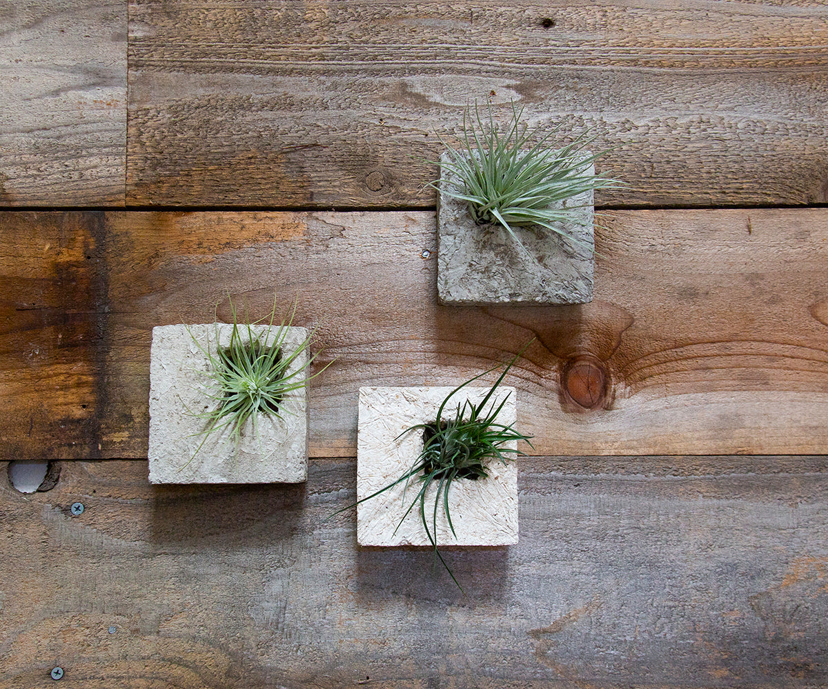 Air Plant Sconce - Slate