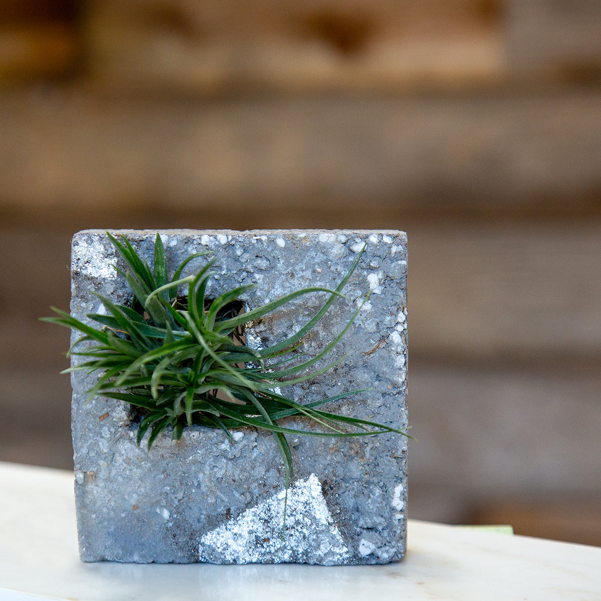 Air Plant Sconce - Slate SilverLeaf with airplant