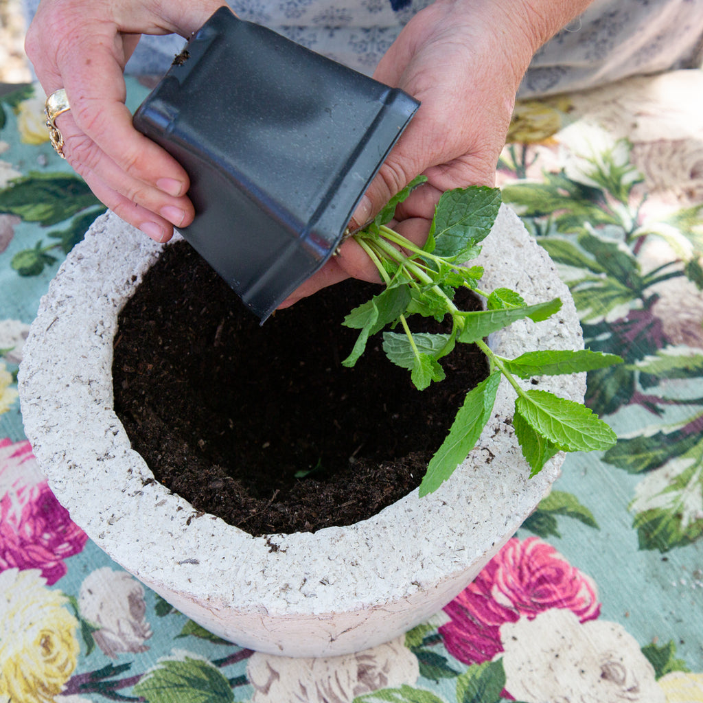 Mint Herb Garden Planter -  DIY Kit