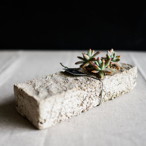 Open image in slideshow, Succulent Flute