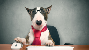 HOW TO ENSURE YOUR PAWSONAL ASSISTANT IS HAPPY IN THE WORKPLACE