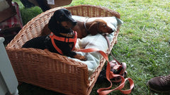 Wicker Settee Dog Bed