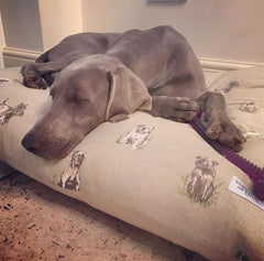 Large Pillow Dog Bed