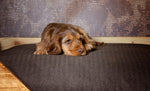 Sale: Tweed (Previous Collection) Pillow Dog Beds & Covers
