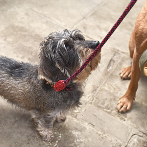Rope Collars Plus Lead In Red