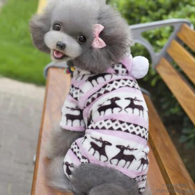 dog_winter_sweater