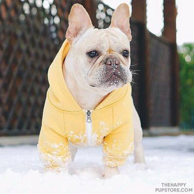 Yellow Dog Winter Hoodie