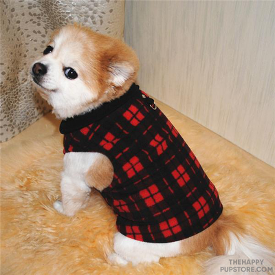 dog_plaid_shirt