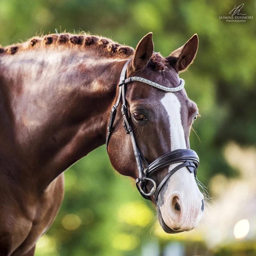 Anastasia Leather Bridle - Brown