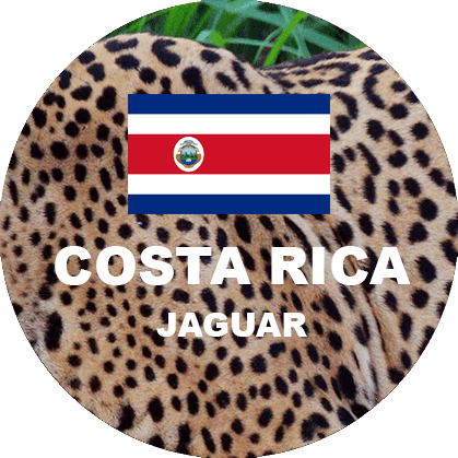 Costa Rica Jaguar Honey Fresh Roasted Coffee