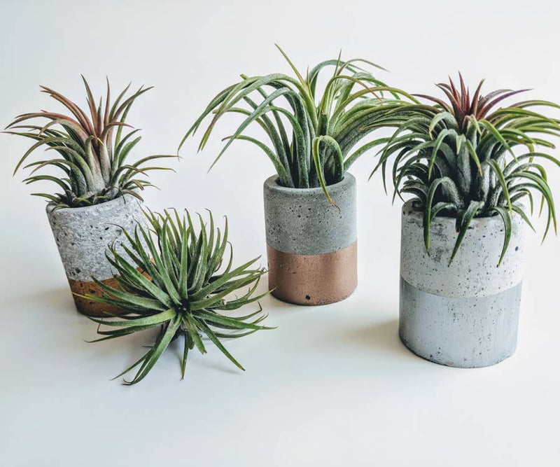 Mini Concrete Planter - AboutRuby.com