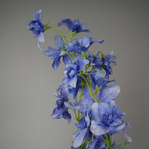 Bunch of Wild Blue Delphiniums