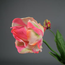 Load image into Gallery viewer, Bunch of Parrot Tulips