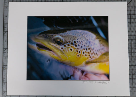 """Brown Trout"" Print $16 Yard Sale Art - Stripn Flywear"