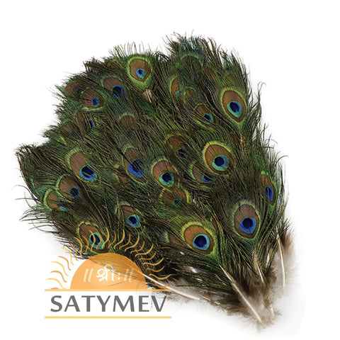 Peacock Feathers | Mor pankh