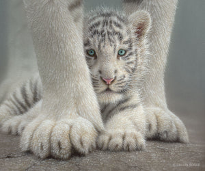 White tiger cub between mothers paws painting art print by Collin Bogle.