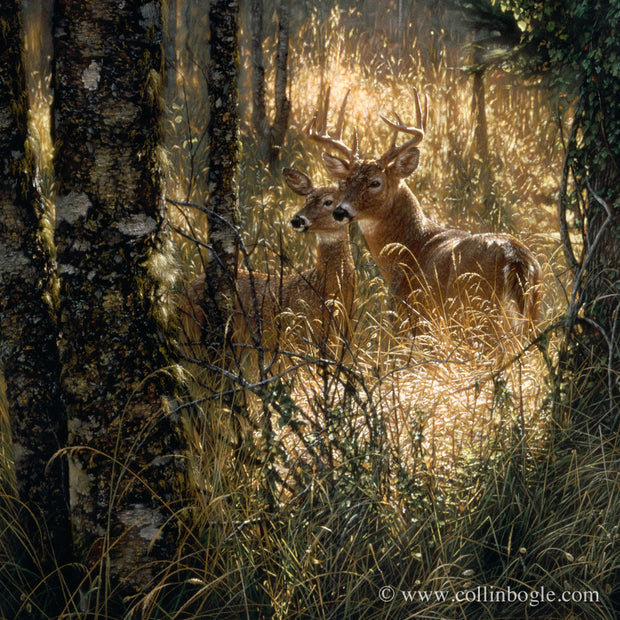 Deer in a sunlit grass field painting art print by Collin Bogle.