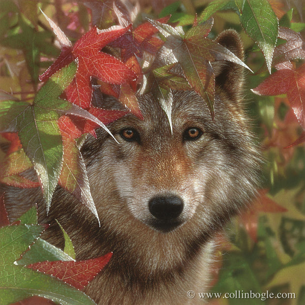 Wolf in autumn leaves painting art print by Collin Bogle.