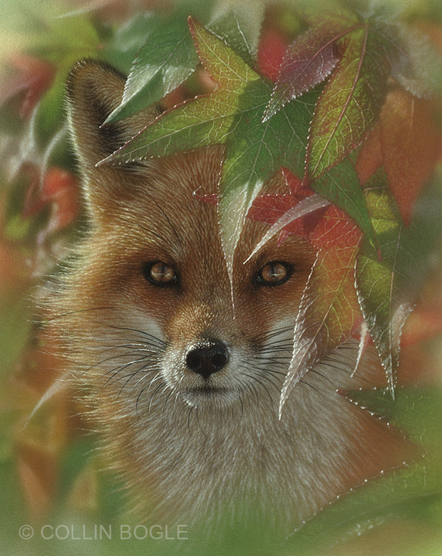 Autumn Red Fox