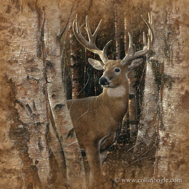 Birchwood Buck - Deer
