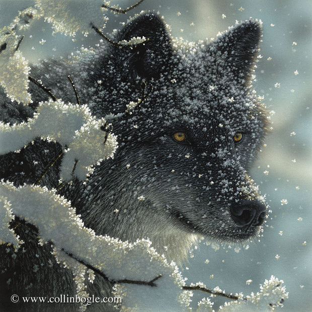 Black wolf in snow painting art print by Collin Bogle.