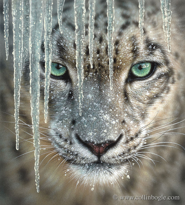 Snow leopard with icicles painting art print by Collin Bogle.