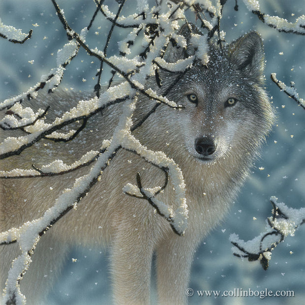 Wolf with snowy branches painting art print by Collin Bogle.